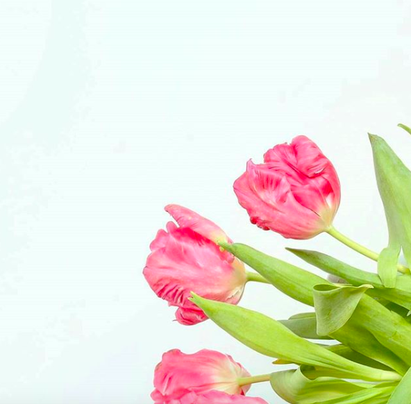 Parrot_Tulips_Grace&Lightness