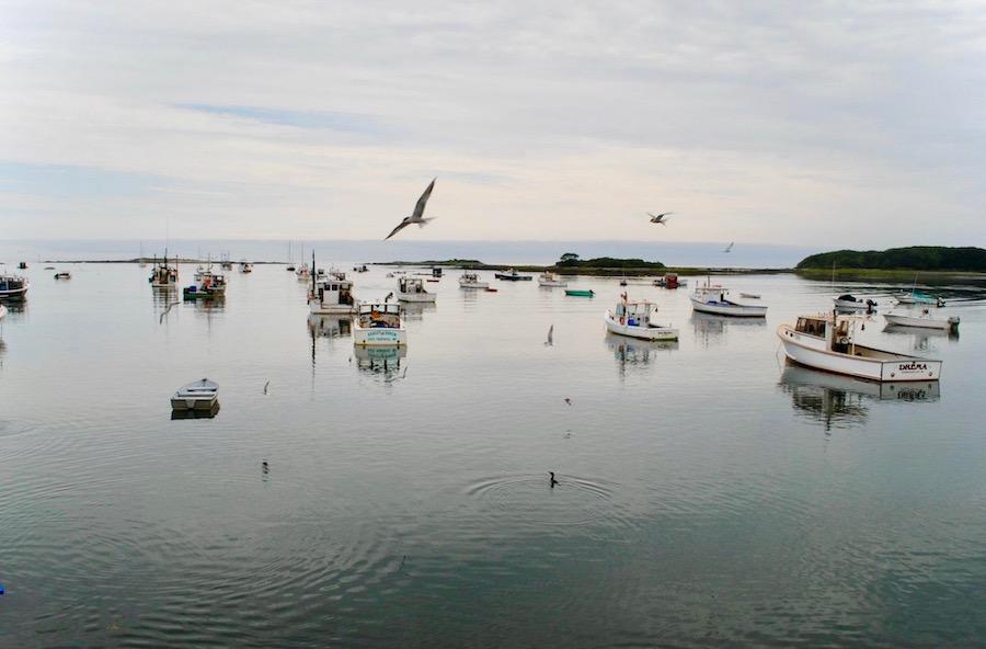 cape-porpoise_pier-77-restaurant-seagulls