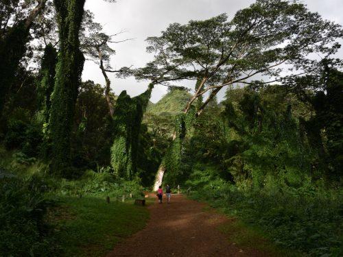 guided-meditation-video-walks