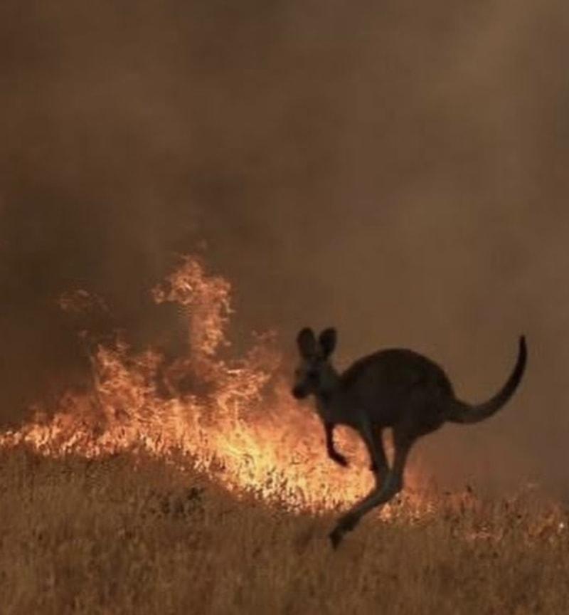 australia wildfires pictures