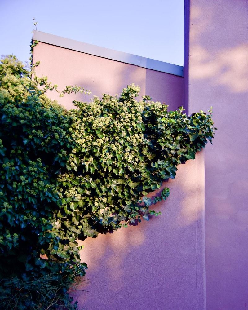 desert-plants-santa-fe