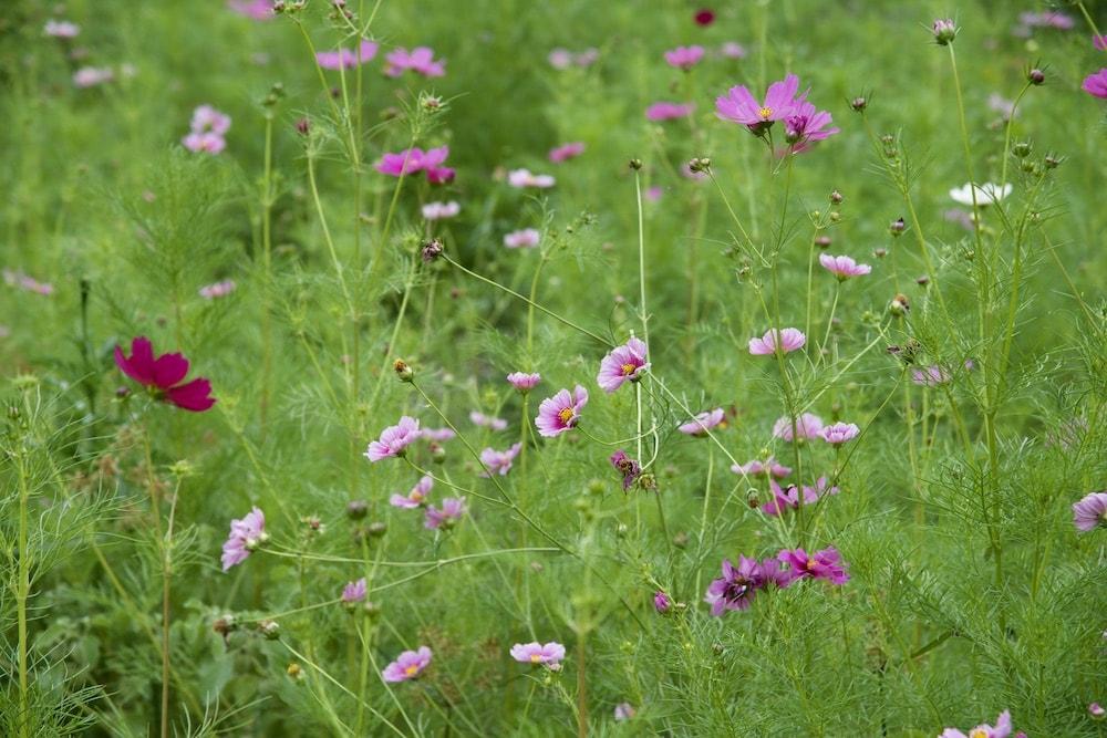 wildflowers-santa-fe-new-mexico