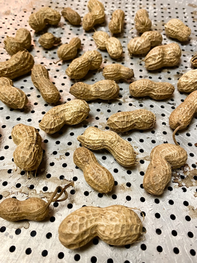 how to roast raw peanuts in shell