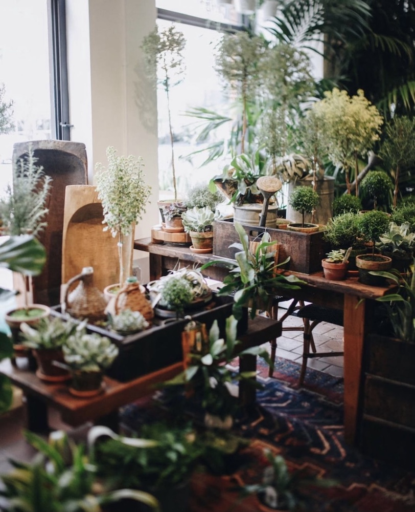 best-plant-shops-nyc