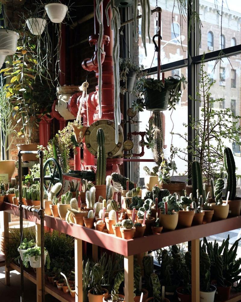 best-plant-shop-nyc
