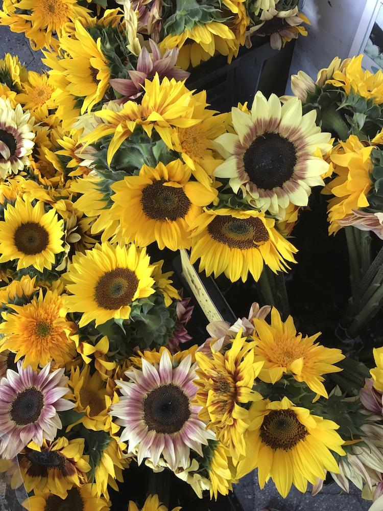 where-to-buy-flowers-nyc_sunflowers