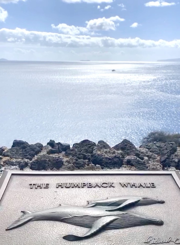 whale-watching-maui-hawaii